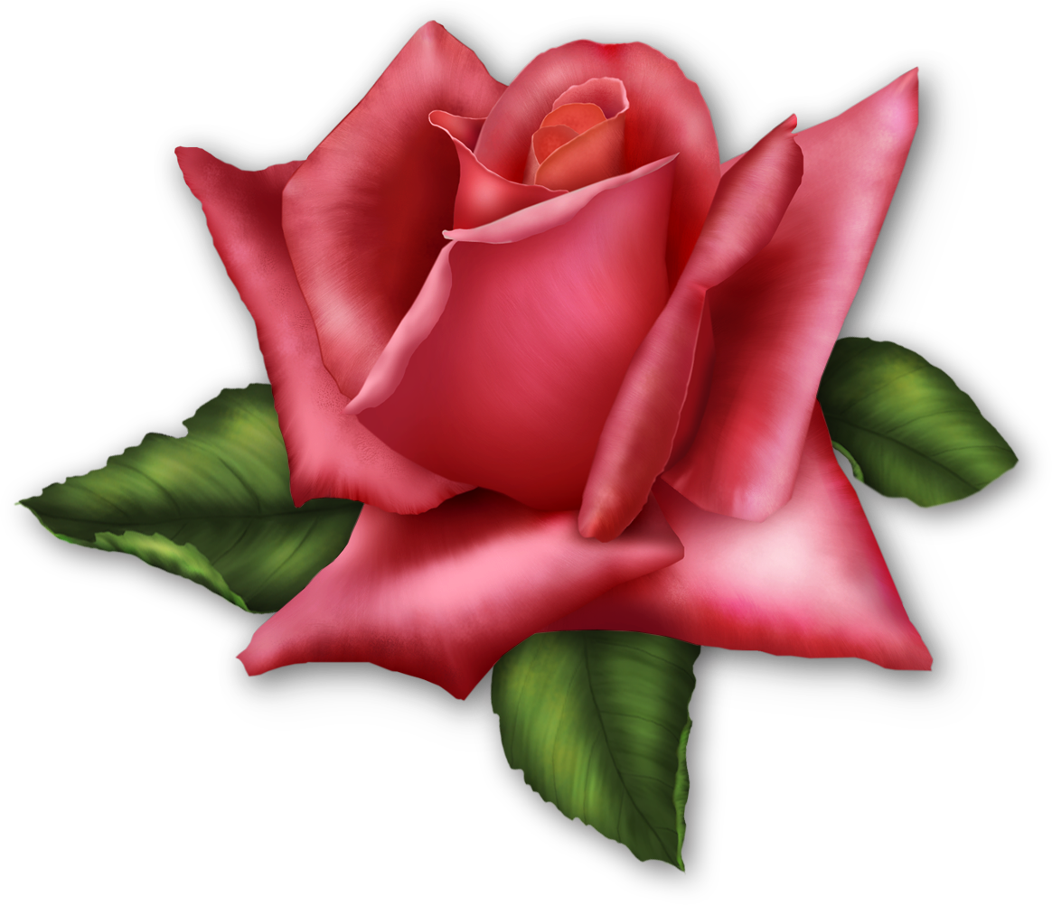 Rose Clipart Transparent Background Clipground