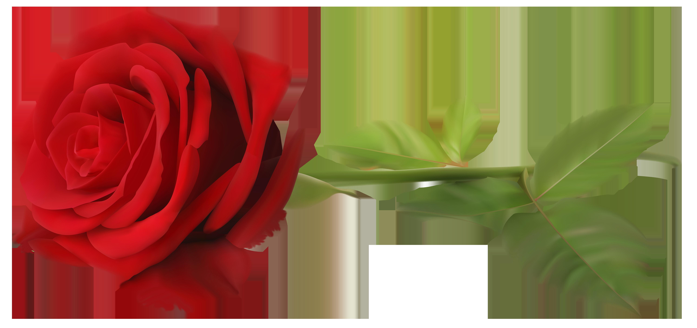 Red Rose with Stem Transparent PNG Clip Art Image.