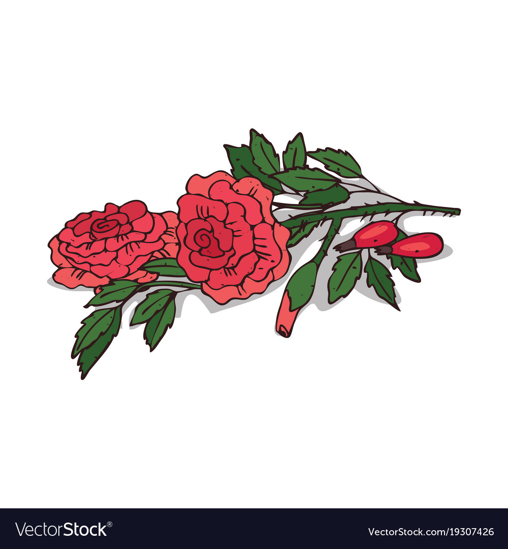 Isolated clipart rose.