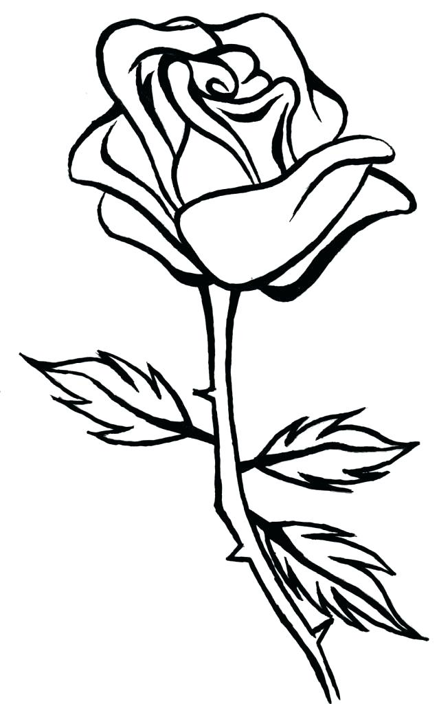 Rose Line Drawing at PaintingValley.com.