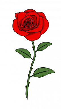 How to Draw Red Rose step 11.