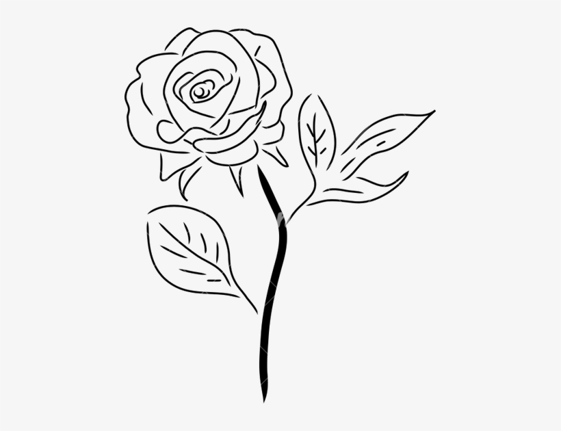 Rose With Stem Drawing At Getdrawings.