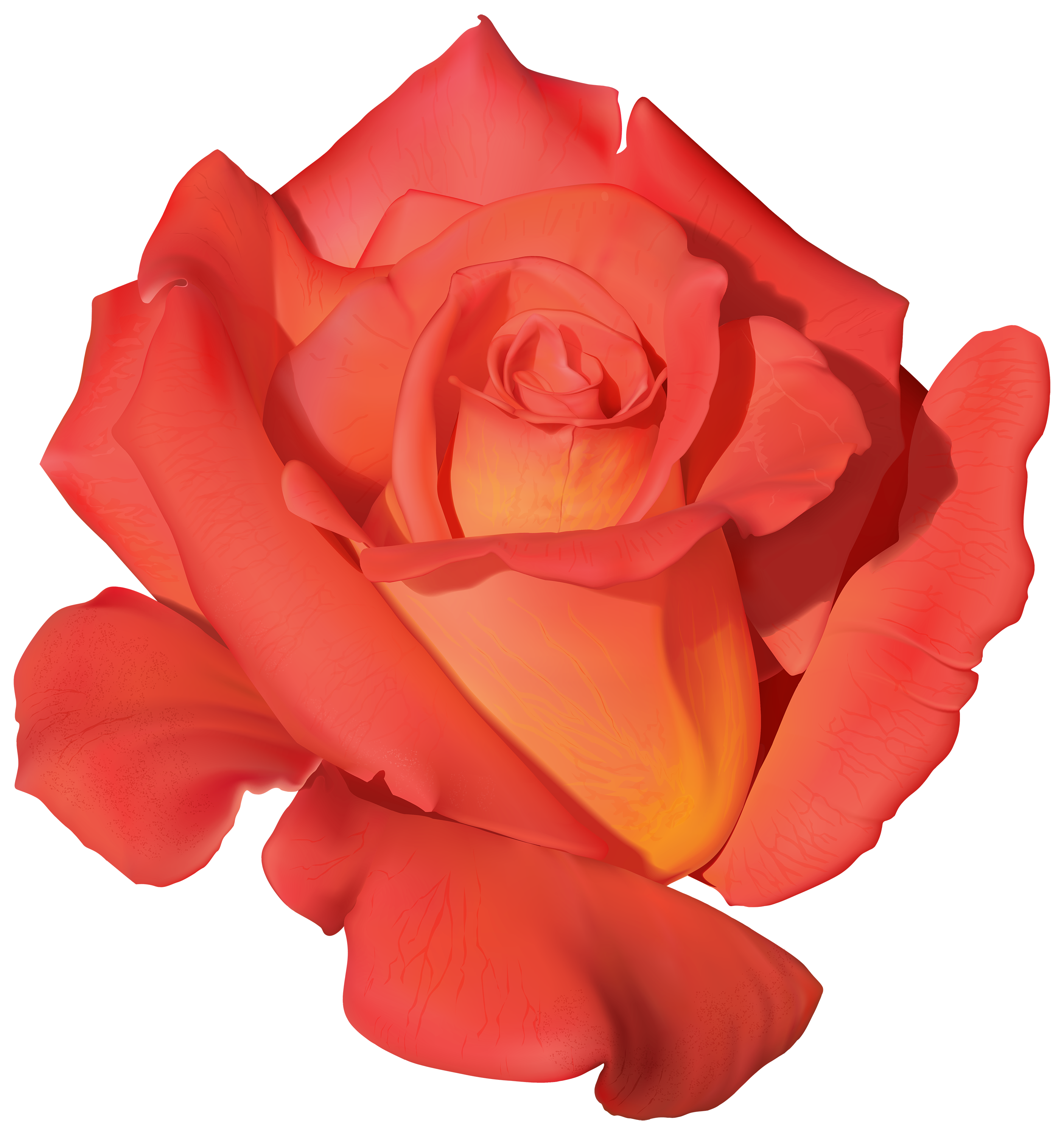 Orange Rose PNG Clipart.