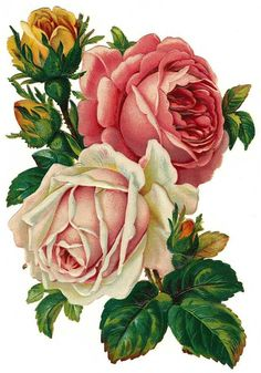 Clip Art: Royalty Free Gorgeous Vintage Rose Image.