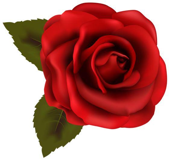 Beautiful Red Rose Transparent PNG Clip Art Image.