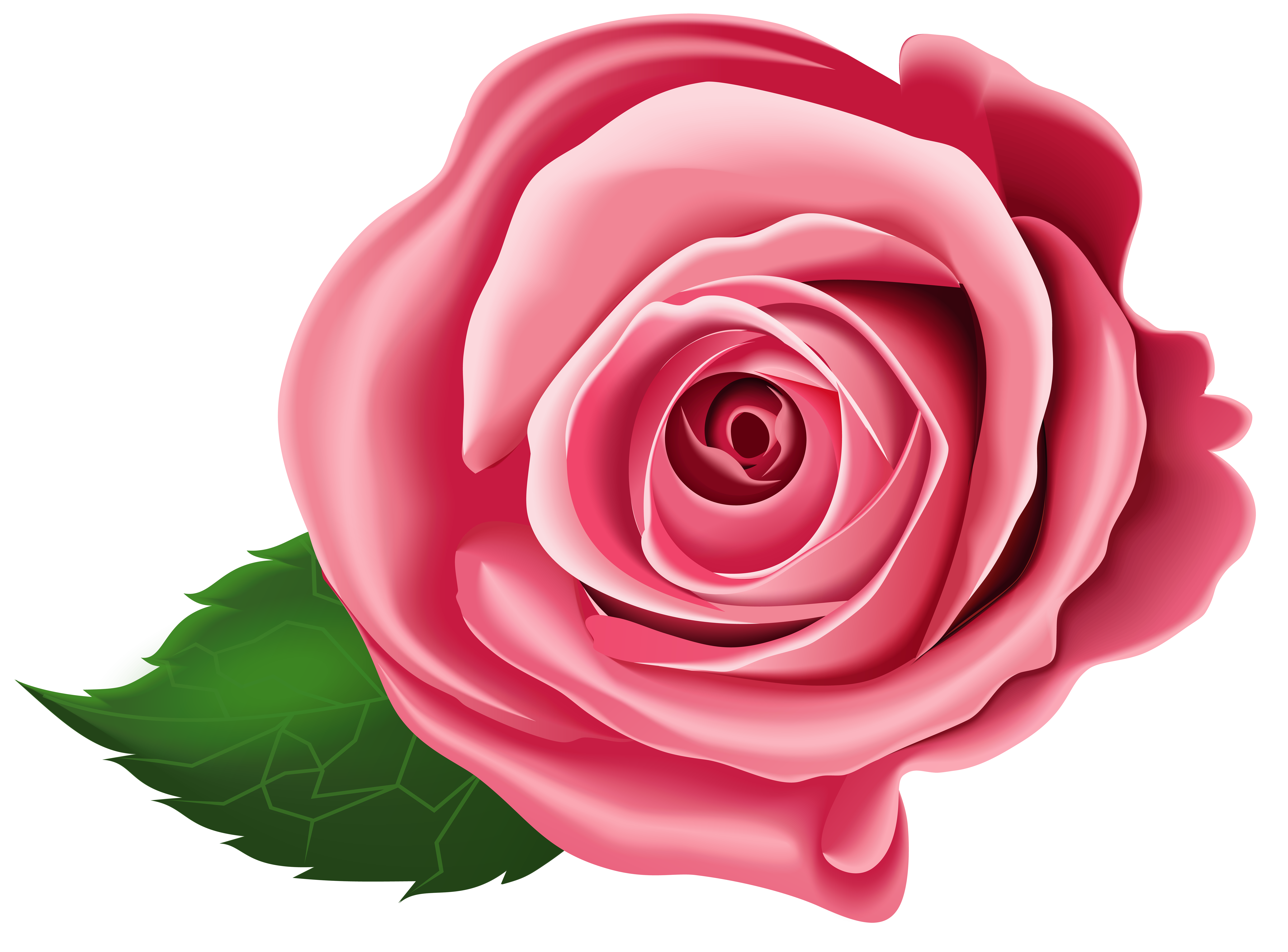 Rose Transparent PNG Clip Art.