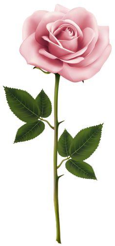 Rose Transparent Clip Art PNG Image.