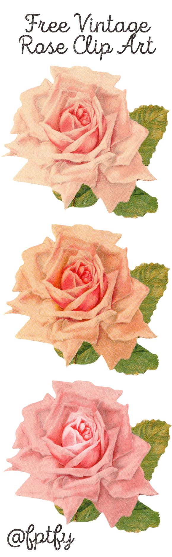 Beautiful Vintage Rose Clip Art.