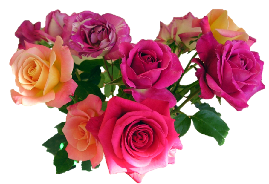 Pink Roses Flowers Bouquet PNG Image.