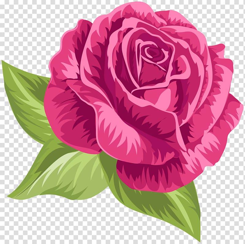 Pink rose flower illustration, file formats Lossless.