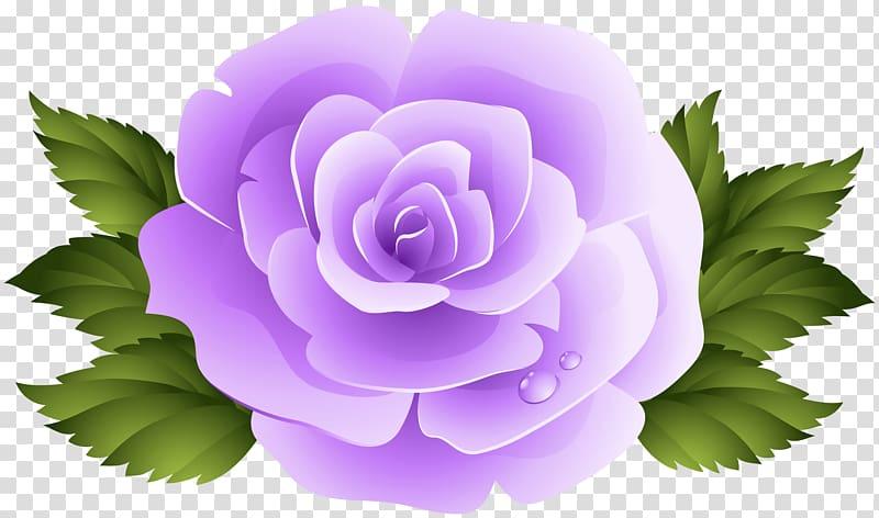 File formats Lossless compression, Purple Rose transparent.