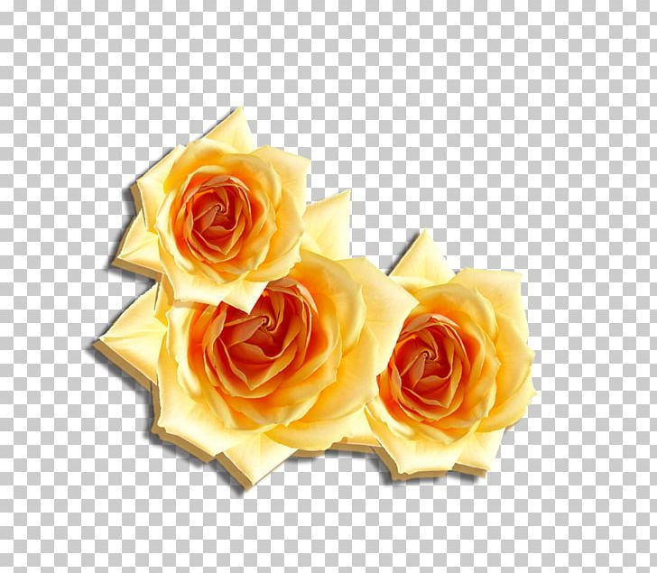 Beach Rose Flower Computer File PNG, Clipart, Beach Rose.
