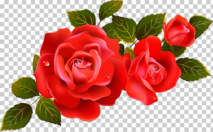 Rose Flower , Large Red Roses Element, red roses with leaves.