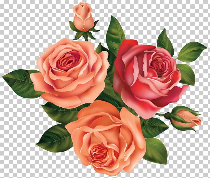 Black rose Flower , white roses PNG clipart.