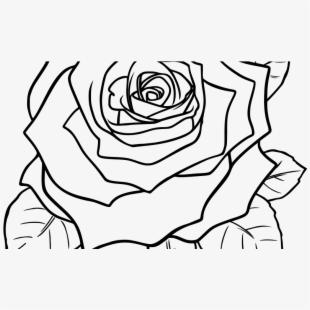 Flower Rose Drawing At Getdrawings Com Free Ⓒ.