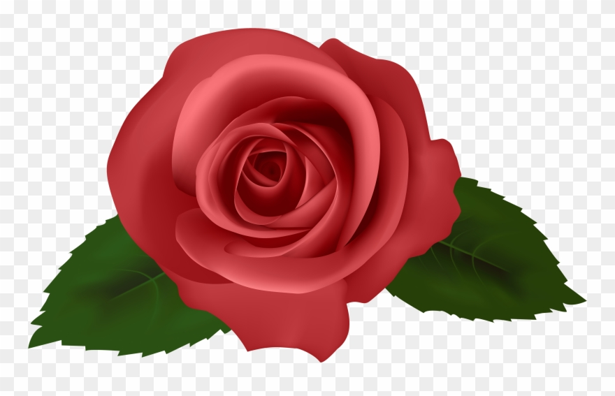 Wallpaper Roses Full Hd Wallpaper Roses Full Hd.
