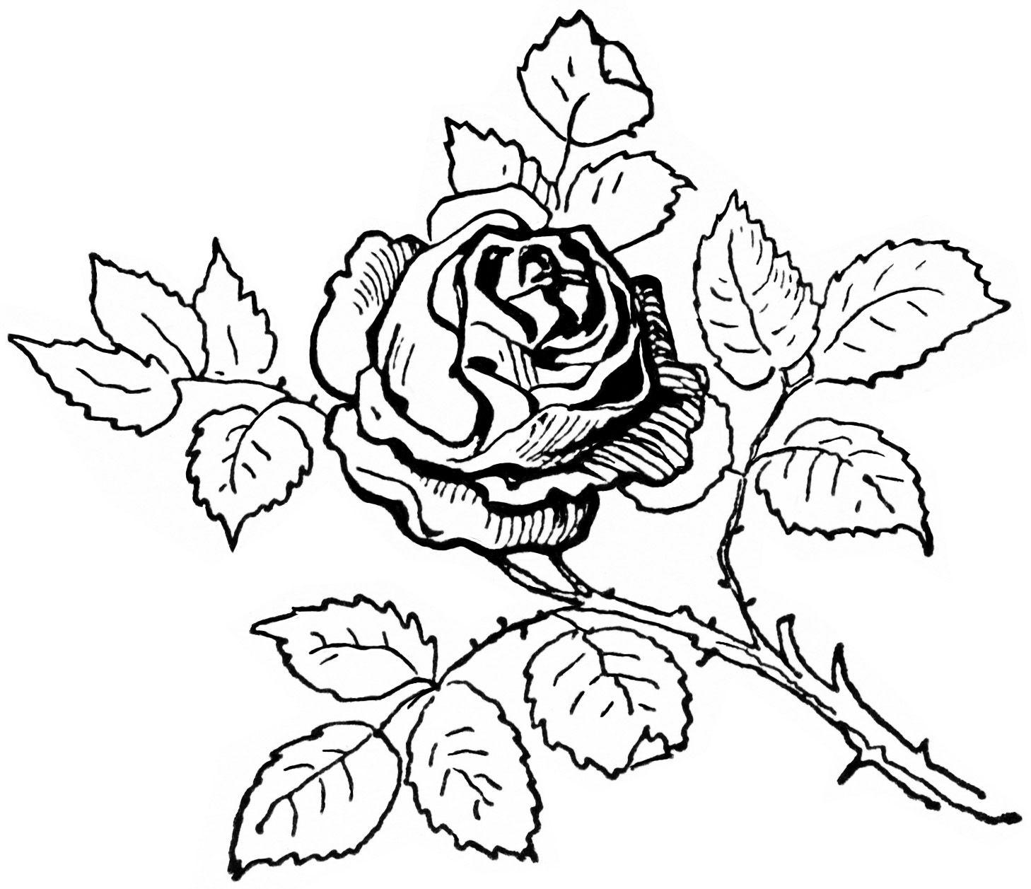 Vintage Rose Graphics.