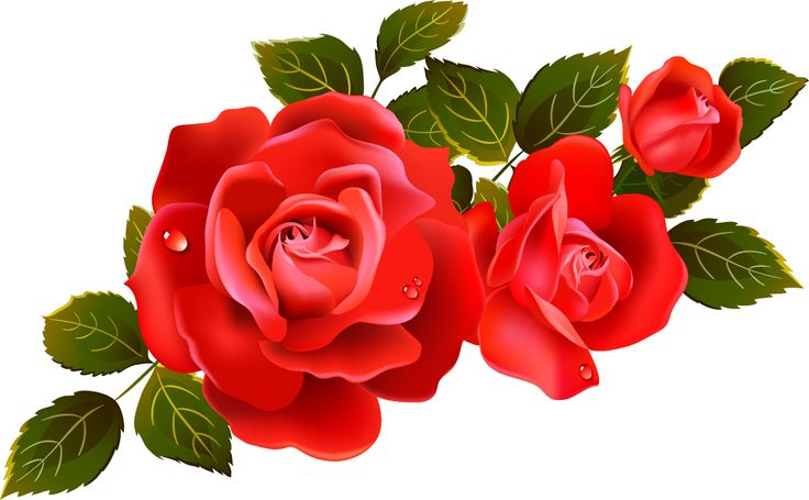 Clipart red rose flowers.