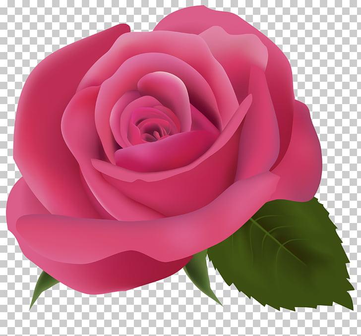 Pink , Pink Rose Transparent Background PNG clipart.