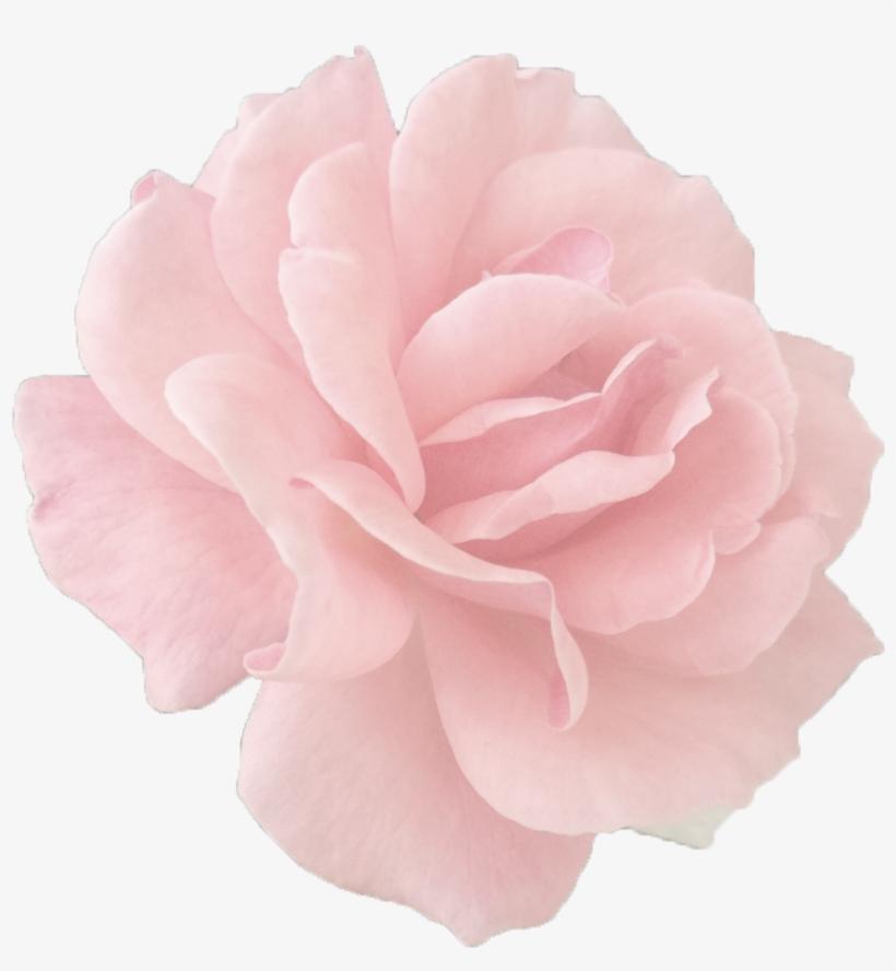 Tumblr Roses Png.