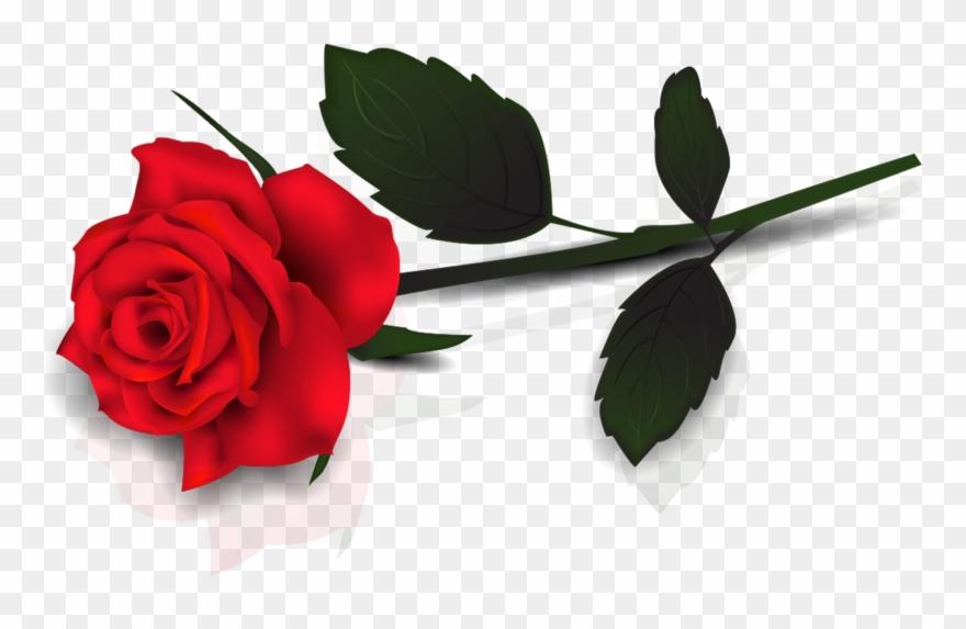 Rose Clipart Hd.