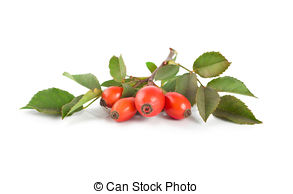 Rose hip Stock Photos and Images. 4,313 Rose hip pictures and.