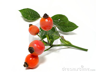 Rose Hip (Rosa Canina) Stock Photo.