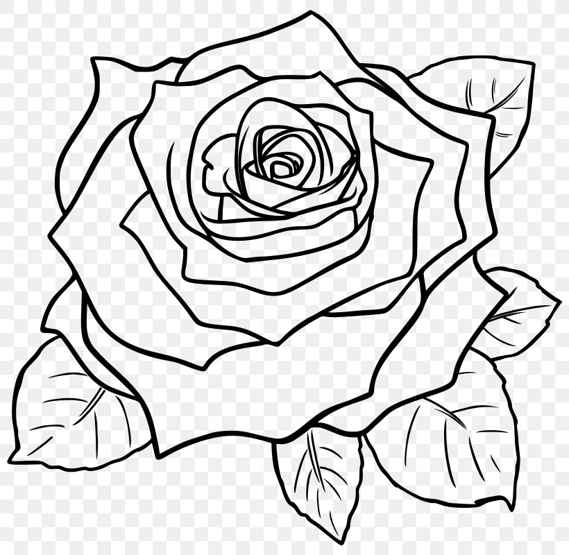 Drawing Rose Line Art Pencil Sketch, PNG, 800x800px, Drawing.
