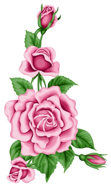 Roses Decoration PNG Clipart Image.