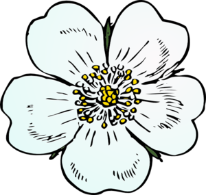 White Rose Clip Art at Clker.com.