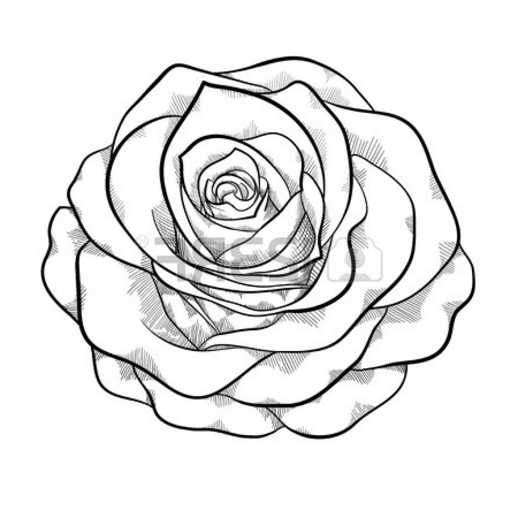 Rose Outline Clipart.