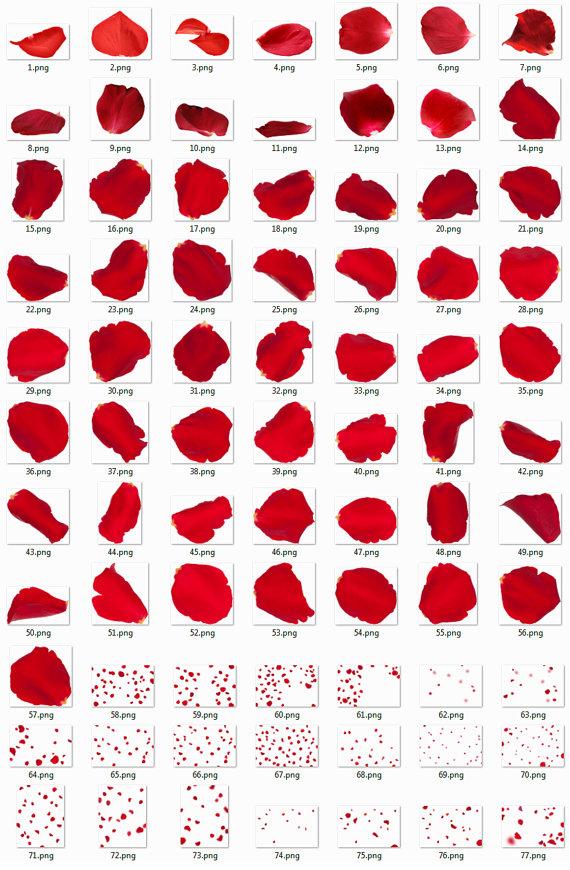 60 Rose Petals Overlays Photoshop Overlays Petals Clip Art Petals.
