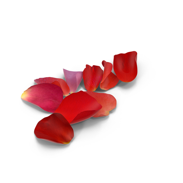 Rose Petals PNG Images & PSDs for Download.