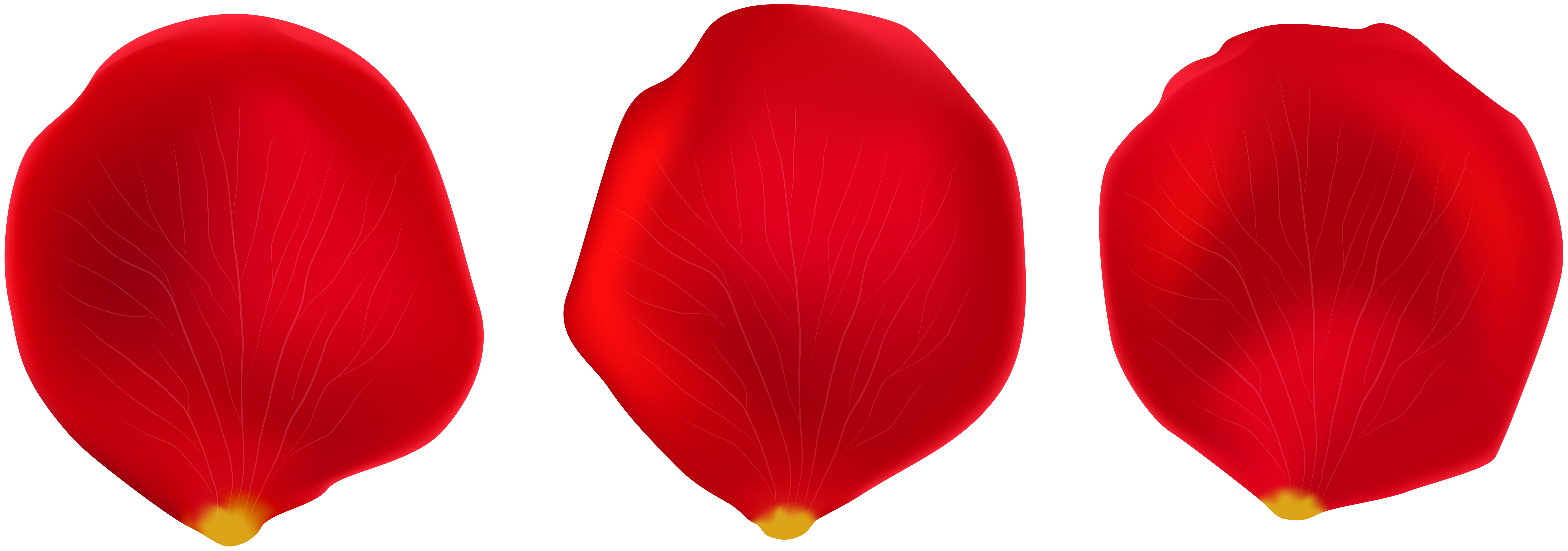 Rose petals clip art clipart images gallery for free.