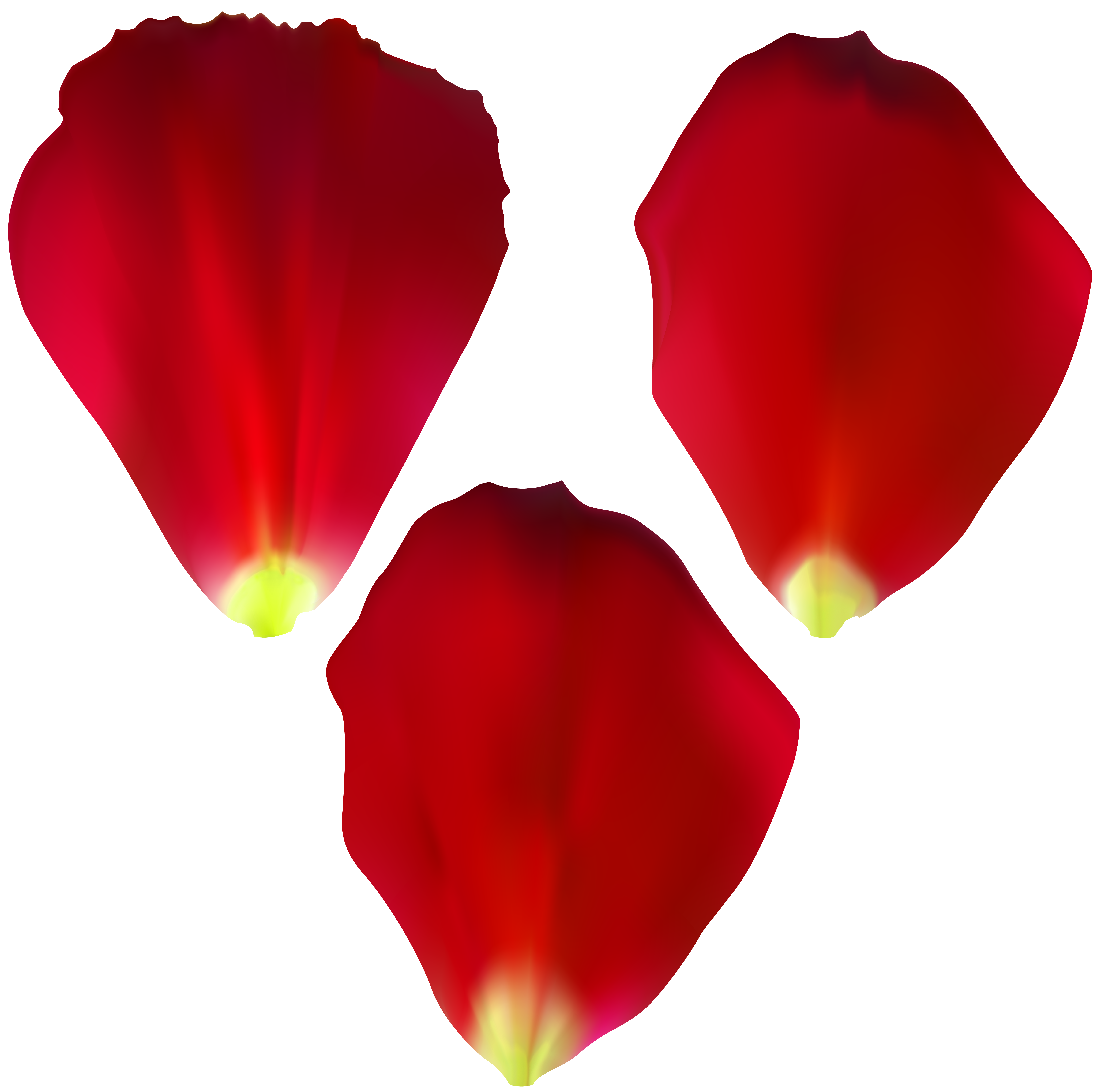 Rose Petals Set Transparent Clip Art.