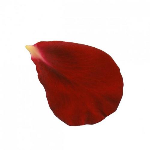 Rose Petals Clipart.