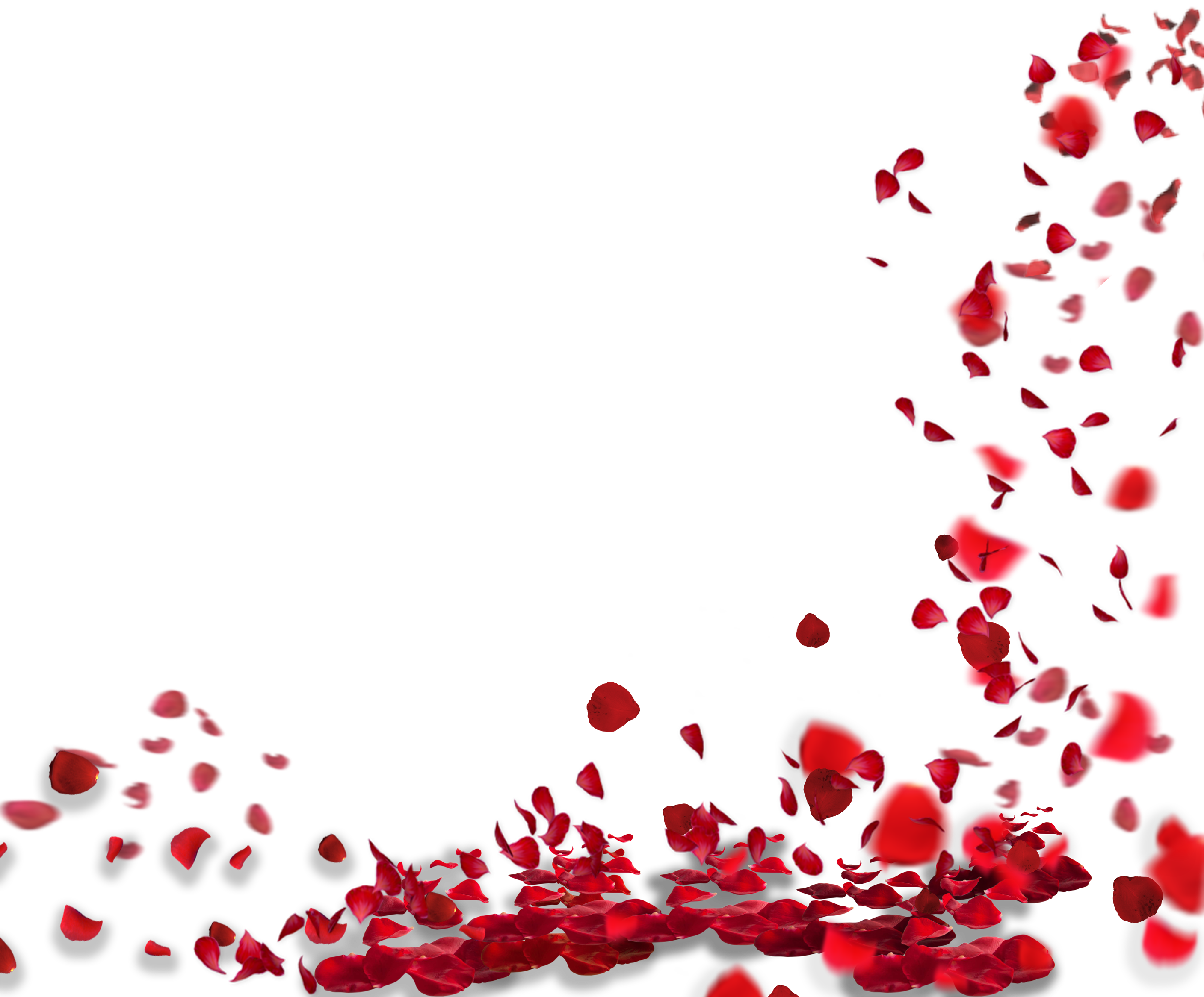 Rose Petals Png images HD quality free download.