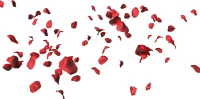 Download Rose Petals PNG HD.