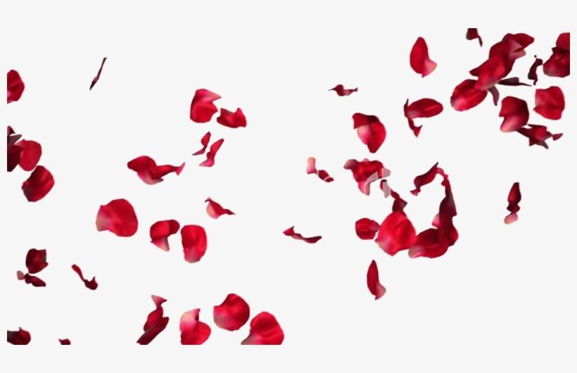 Falling Rose Petals Transparent Png.