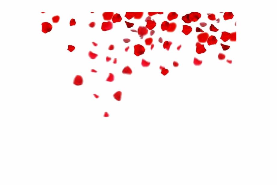 Falling Rose Petals Png Clipart.