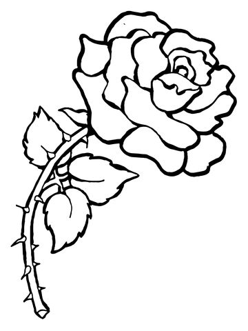 25+ best ideas about Rose With Thorns on Pinterest.