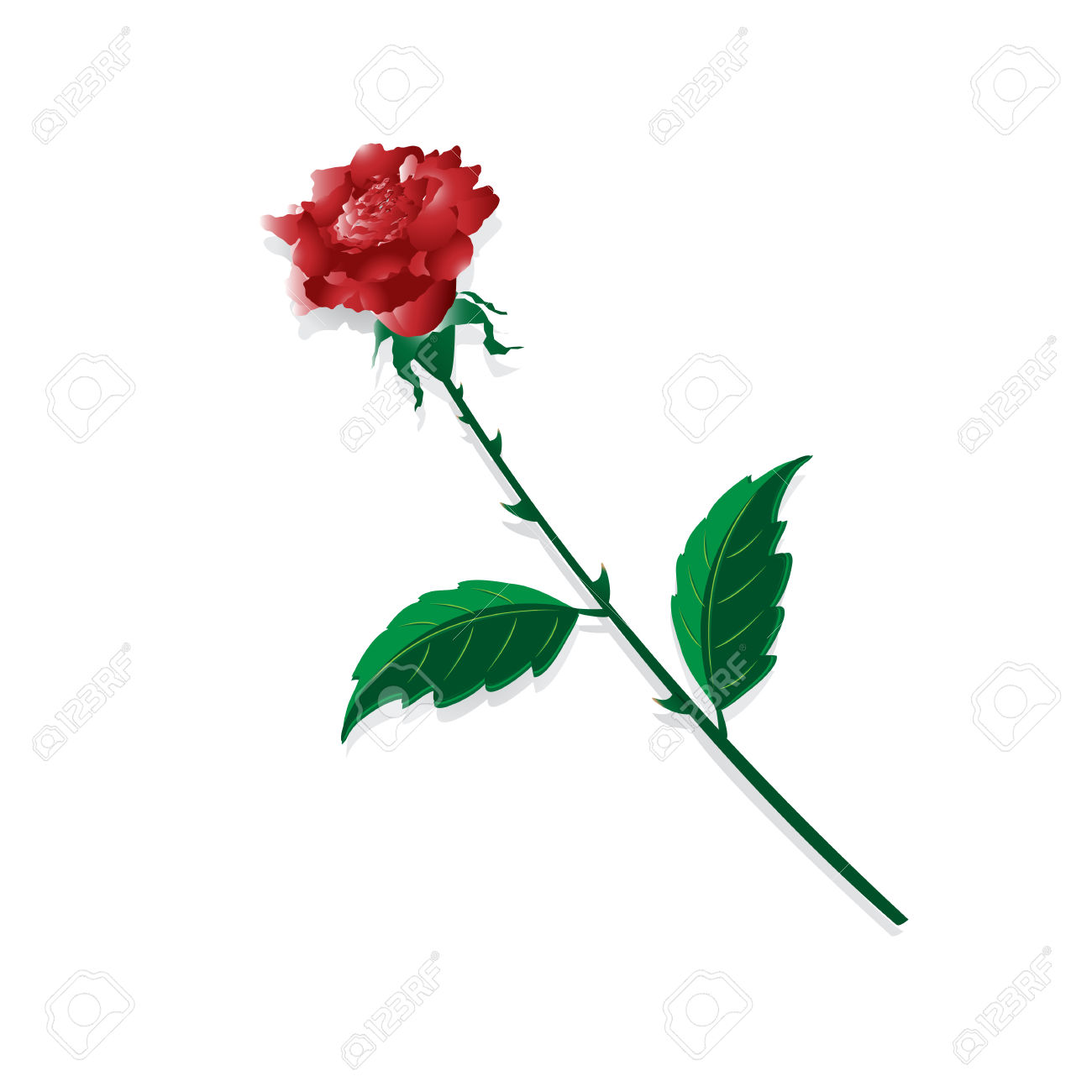 Flower Of The Rose With Thorn On White Background Royalty Free.