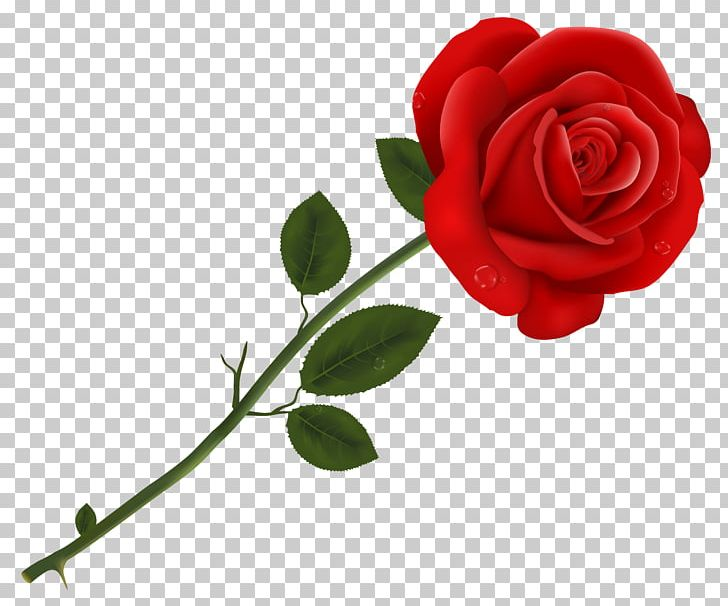 Lancaster Tea Red Rose Pizzeria Red Roses PNG, Clipart.