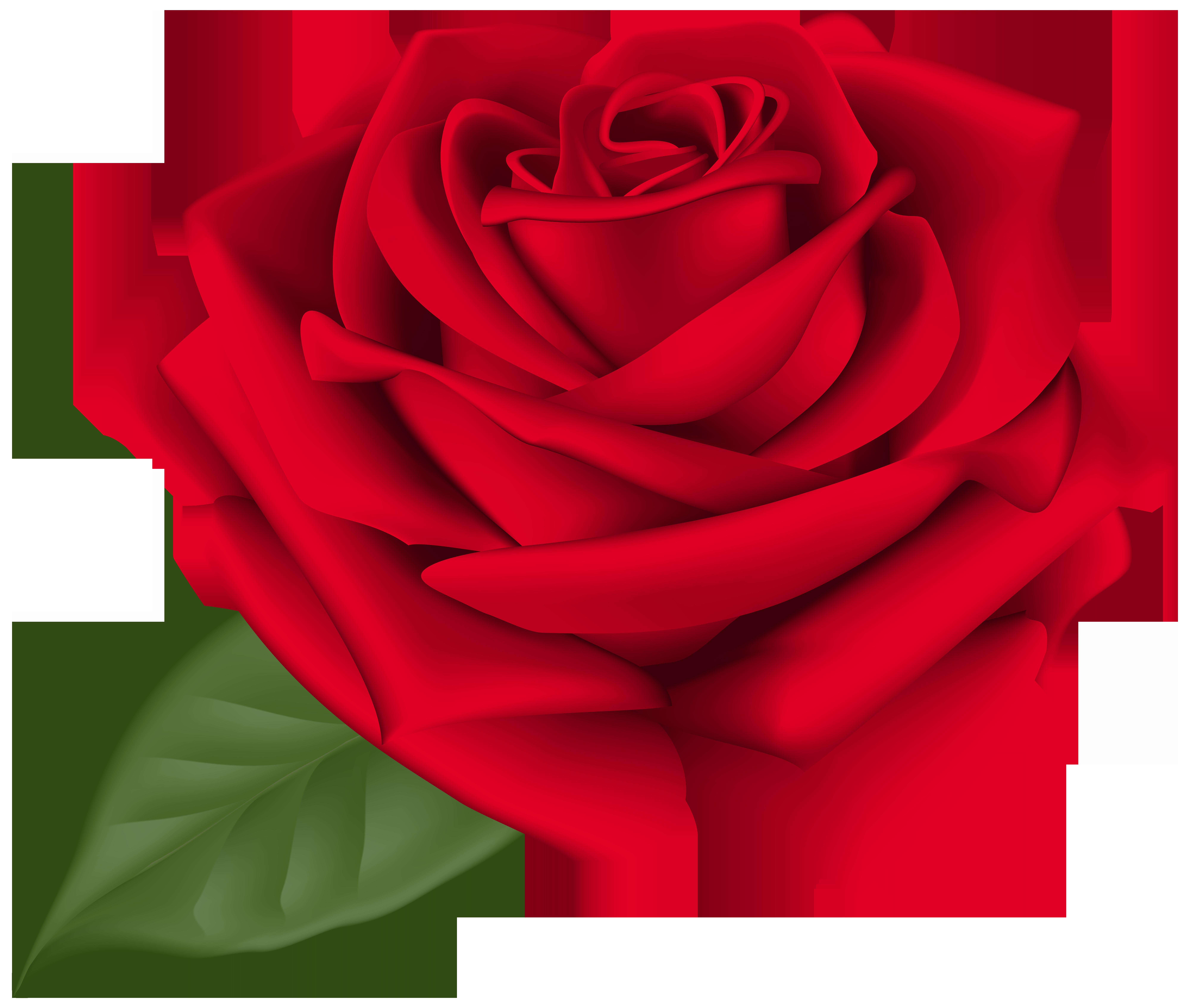 Rose Red Transparent PNG Clip Art Image.