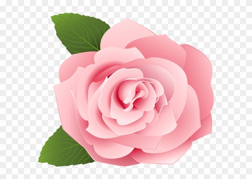 Rose Png.