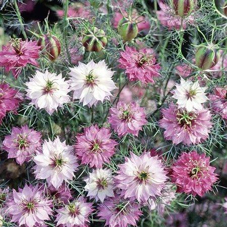 Trockenblumen, Gräser im Lubera® Gartenshop.