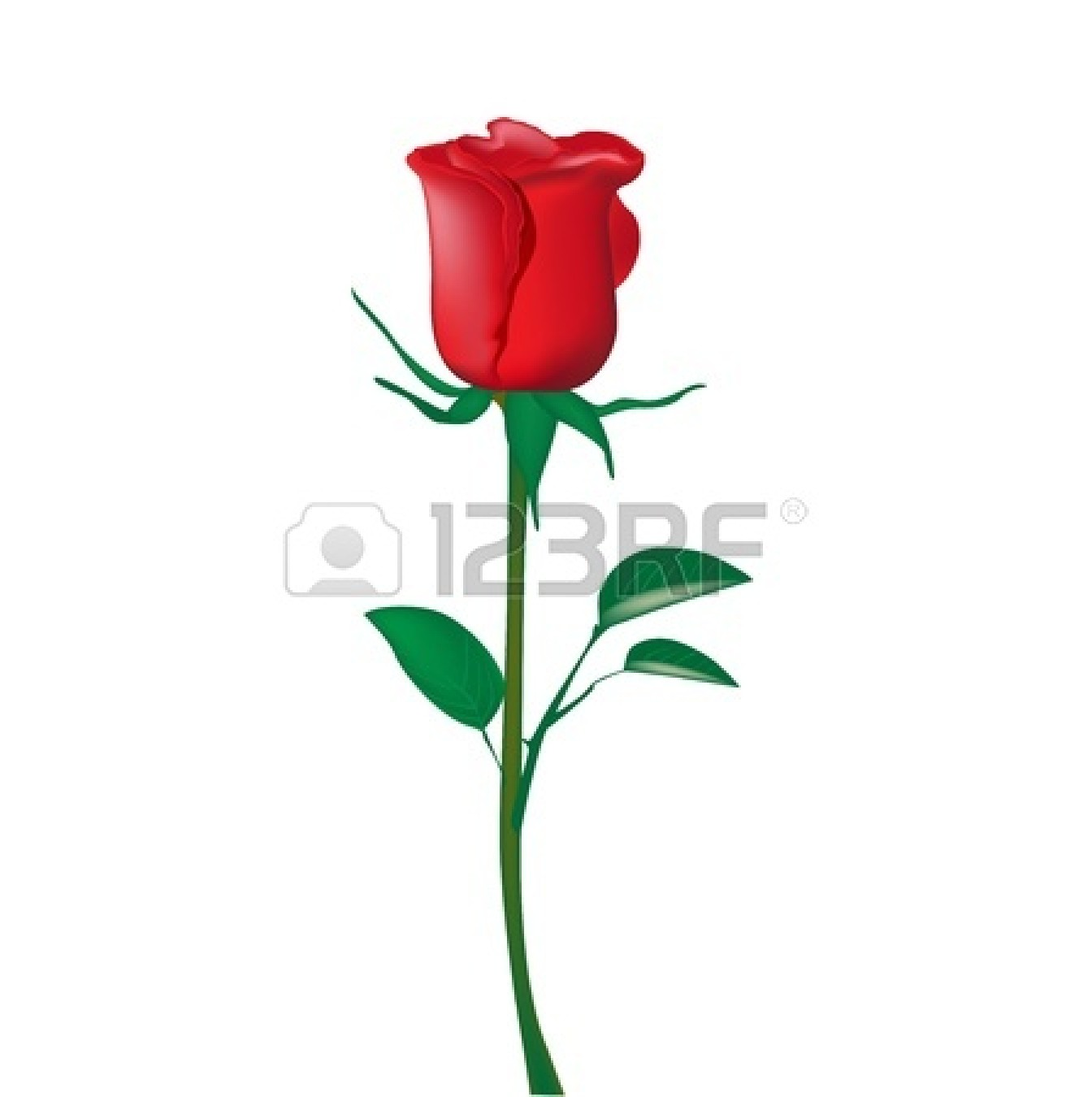 Single Stem Rose Clip Art.