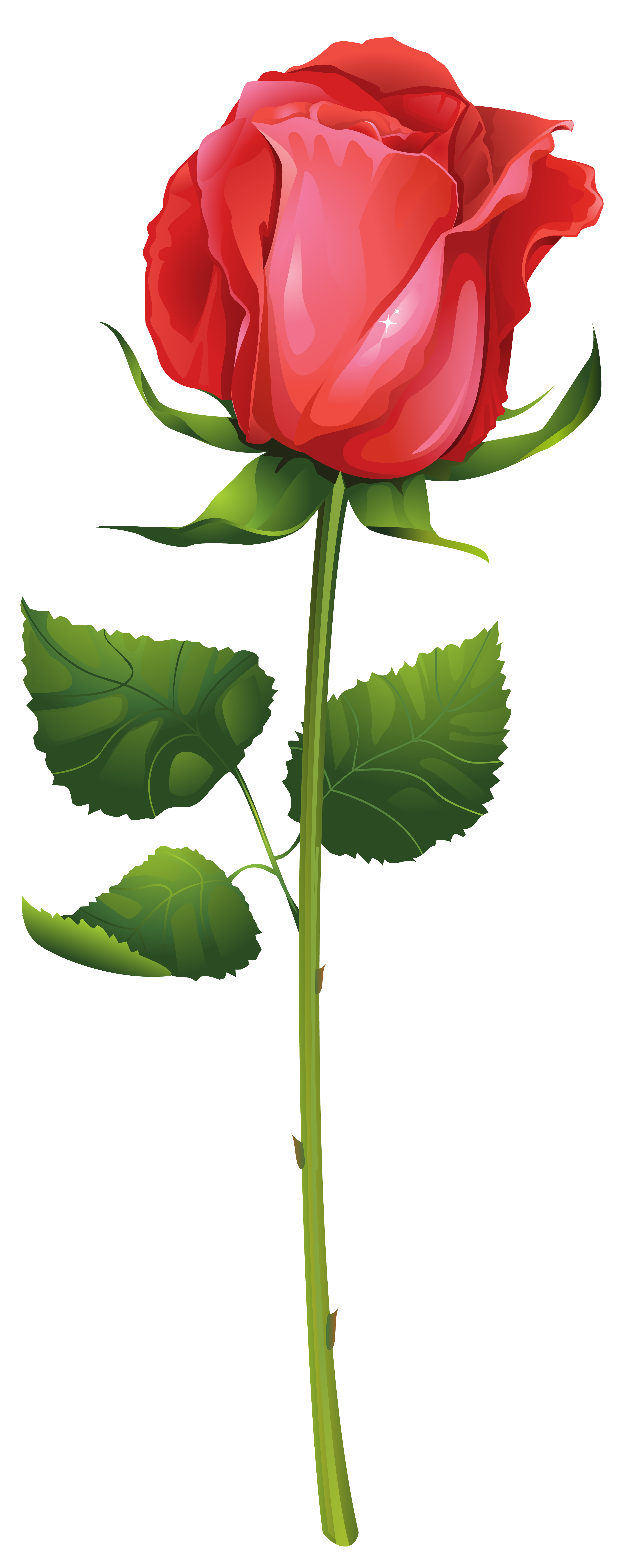 Rose with Stem PNG Clip Art Image.