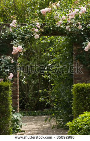 Climbing Rose Stock Photos, Royalty.
