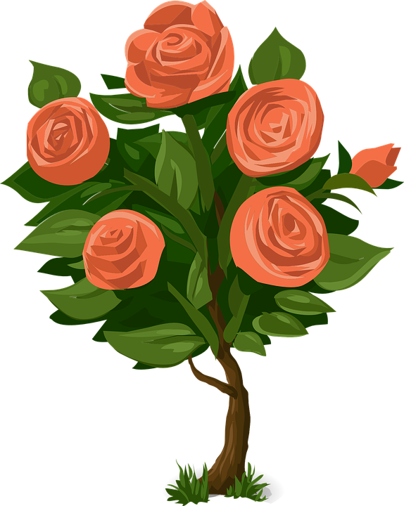 Nature clipart rose flower.